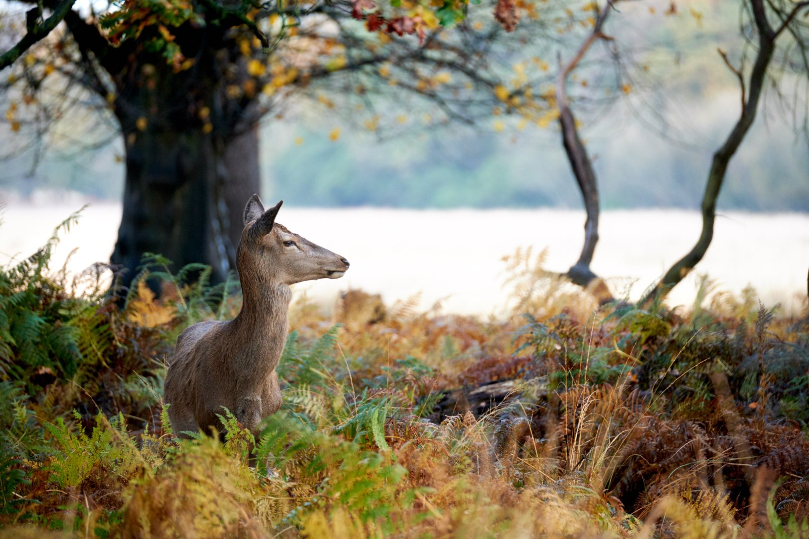 05 Deer